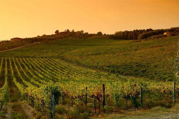 Sursa magicului vin de Chianti