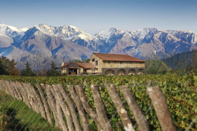 Viile din Mendoza