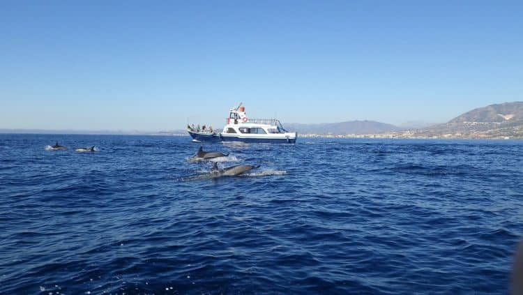 Delfinii se simt excelent in apele ce scalda Costa del Sol