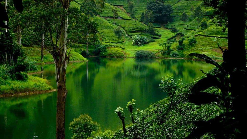 Serenitate la Nuwara Eliya. Foto: sunhill.lk