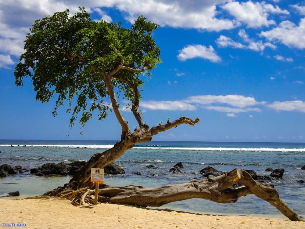 "Nimic nu poate fi mai ""tropical"". Plaja de la Club Med La Plantation de l'Albion"