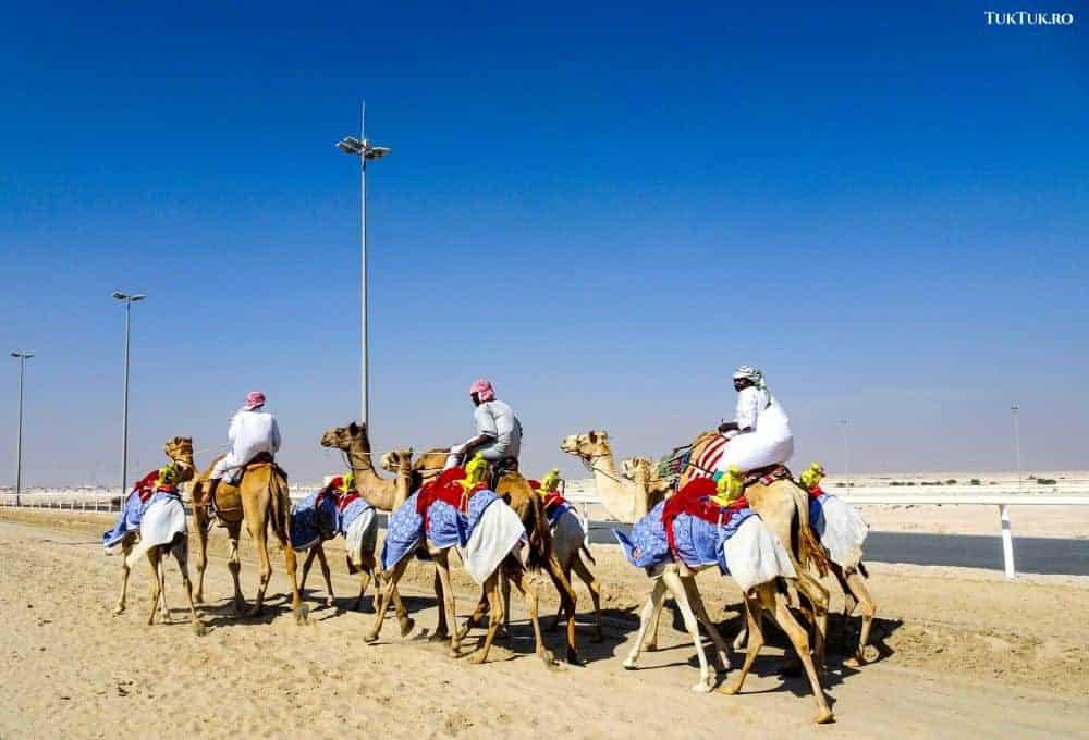 Sudanezii antrenează cămilele pentru sezonul de curse