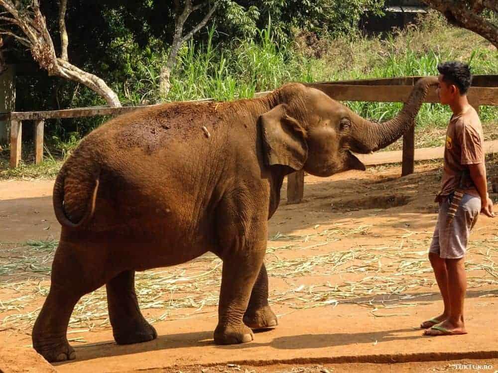 elefanti patara