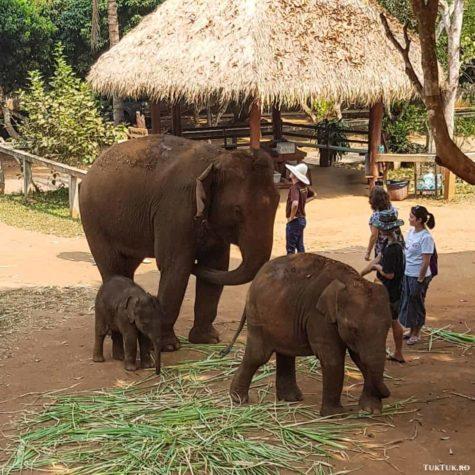 elefanti 3