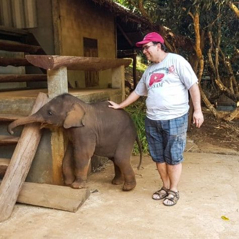 elefanti 4