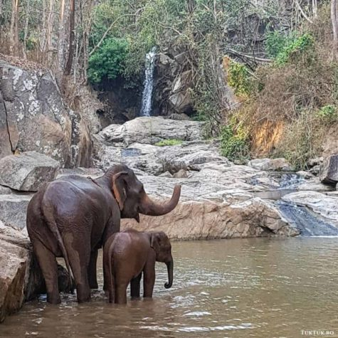 elefanti 7