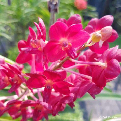 orhidee 2
