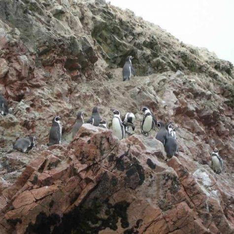 rezervatia pinguini paracas