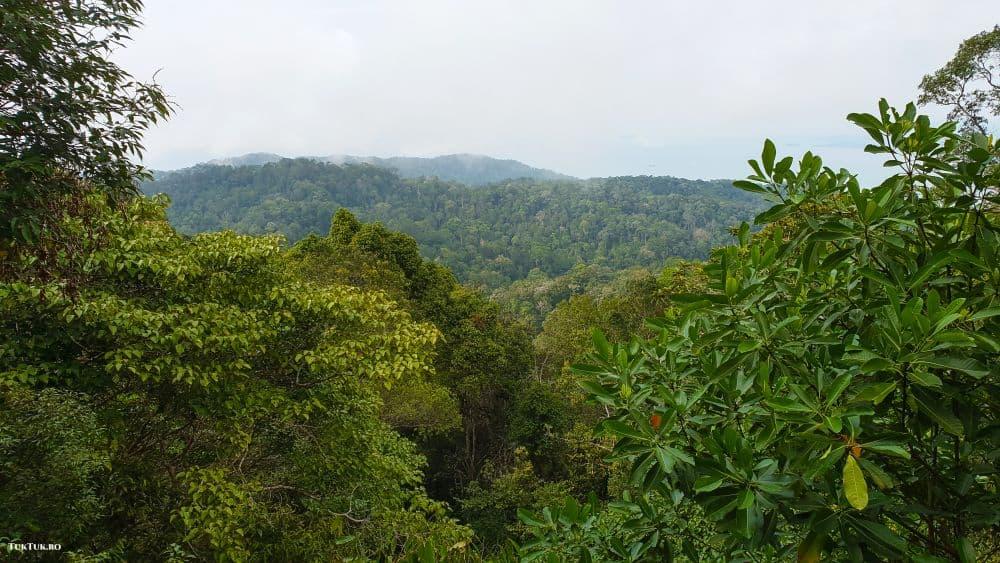 penang hill the habitat