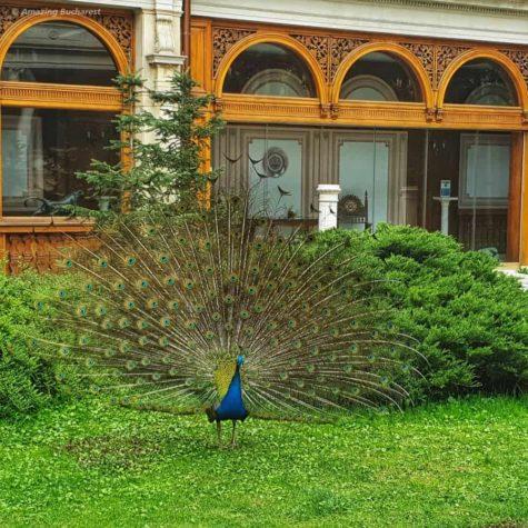 casa ceausescu 36